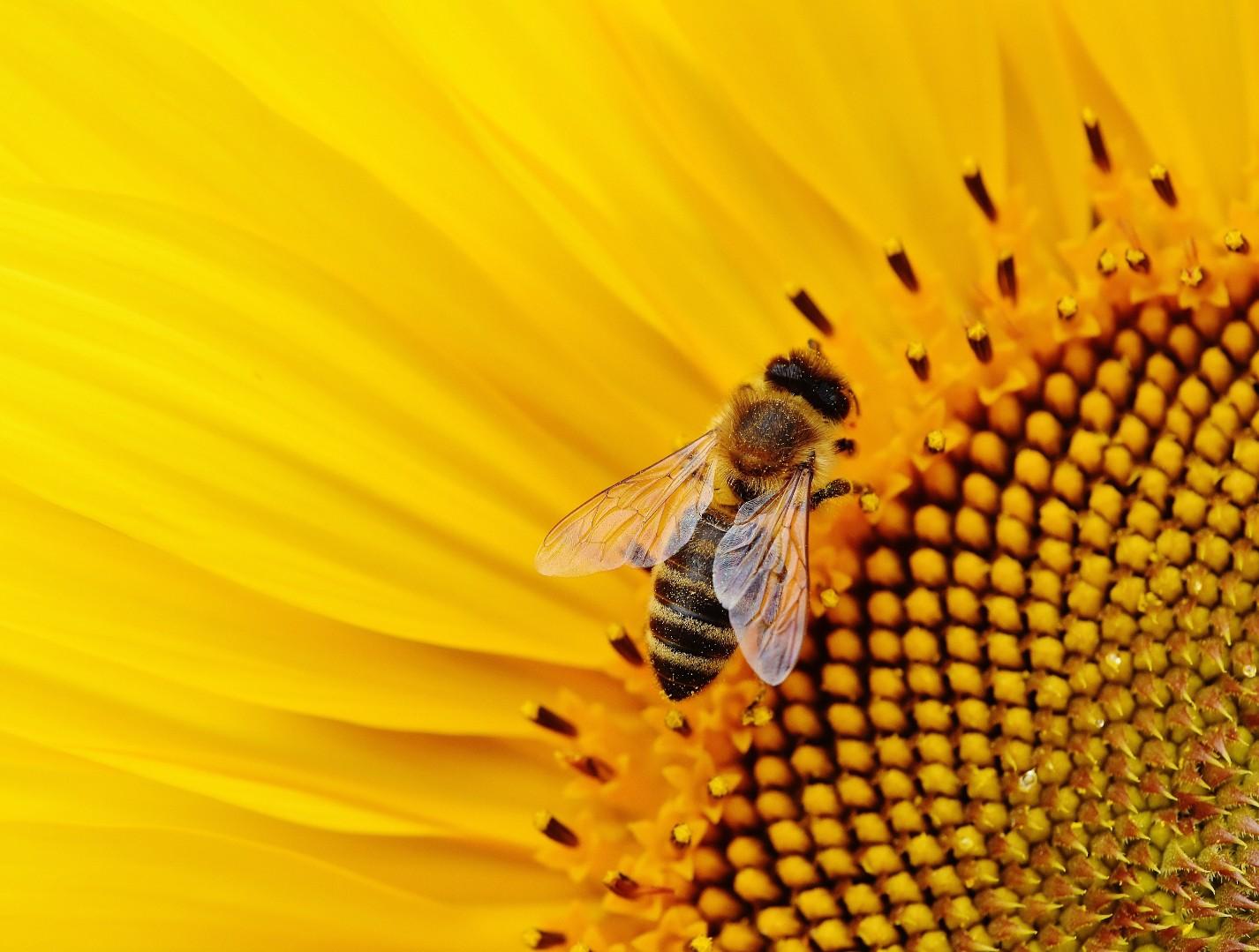 Outdoor Printed Garden Art Wall Panel - Bee & Flower