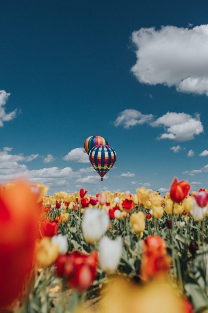 Outdoor Printed Garden Art Wall Panel - Hot Air Balloons