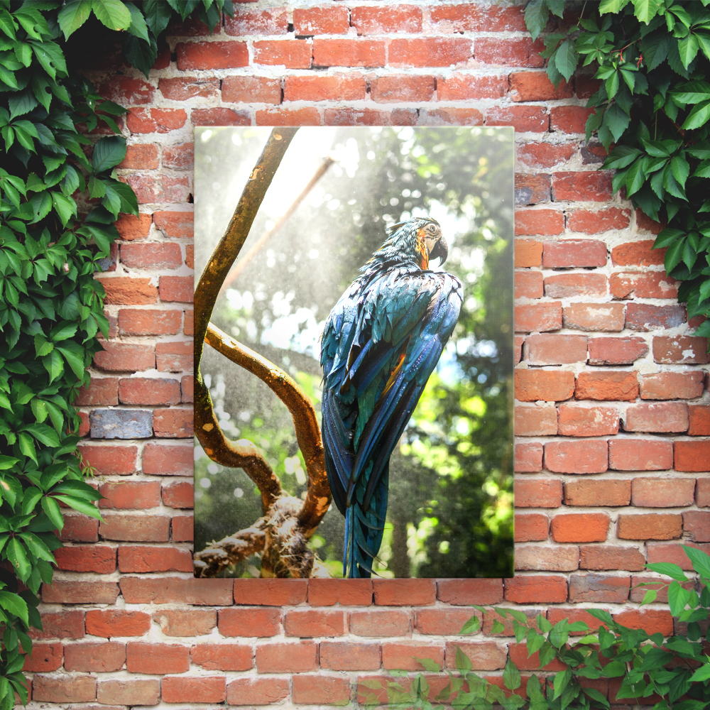 Outdoor Printed Garden Art Wall Panel - Macaw Jungle