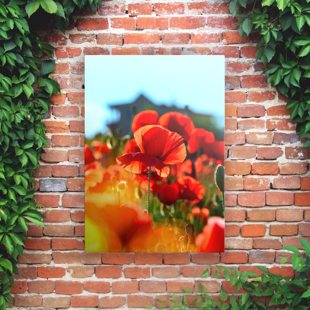Outdoor Printed Garden Art Wall Panels - Poppy Flowers