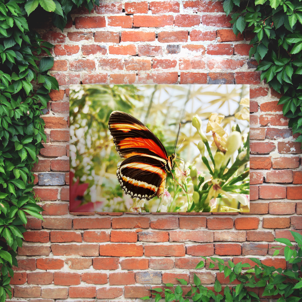 Printed Outdoor Garden Wall Art Panels - Butterfly