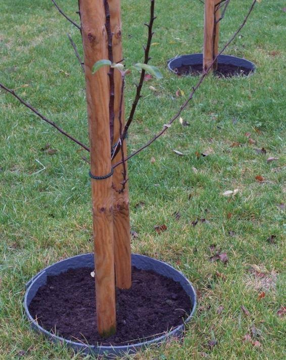 ECO Edge Lawn Edging 25m Coil