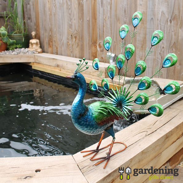 Vibrant Tropical Fan Tailed Peacock