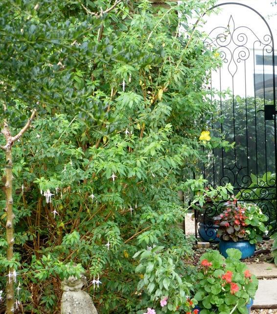 Illusion Wrought Iron Garden Gate Outdoor Mirror
